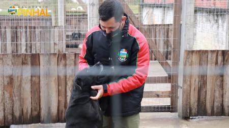 Castração e Chipagem para Animais de Rua